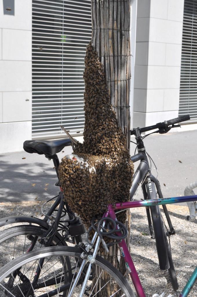 Ein unkonventioneller Bienenschwarm