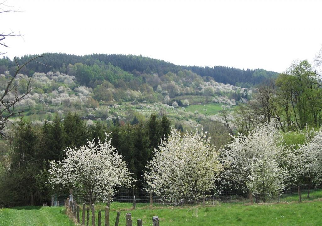 Bienenfreundliche Kulturlandschaft mit ausreichenden und abwechslungsreichen Nektarquellen